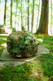 Moss Vase Filler 25 Best Types Of Moss Ideas On Pinterest Growing Moss Aquatic
