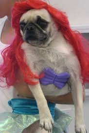 Funny Halloween Animal Costumes 62 Cosplay Pets Images Animal Costumes