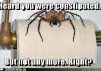 Best 25 Spider Meme Ideas - nice afraid of spiders meme best 25 spider meme ideas on pinterest