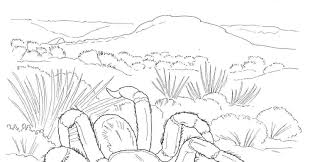 desert landscape coloring pages desert animals coloring pages