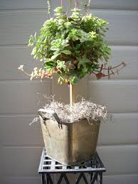 Topiary Balls With Flowers - topiary tree for weddings with flowers moss ball topiary tree