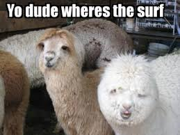 Alpaca Sheep Meme - why alpacas are the best oc album on imgur