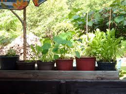 pflanzen f r balkon pflanzen für den balkon gartenbob de der gartenratgeber