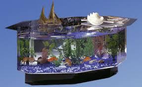 aquarium fishes identifying the most popular varieties