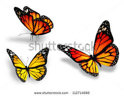 three yellow butterfly isolated on white background