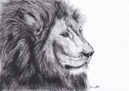 how to draw a lion drawing sketching clip art library