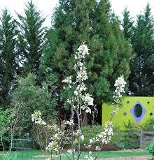 screening plants learn to garden