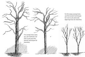 how to draw tree branches and twigs in pen and ink my pen and ink