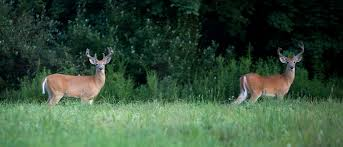 8 reasons why you and i love whitetail deer wired to hunt