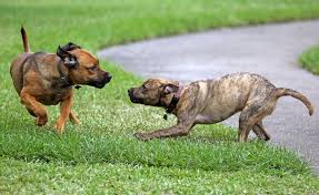 leash law palm beach county commissioners will no longer allow