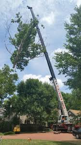 raleigh tree removal services commercial tree service tree