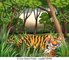 scenery of a tiger walking in a jungle vector clipart search
