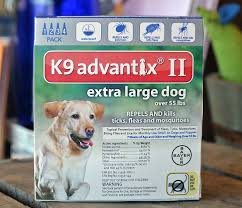 Backyard Flea Treatment by Flea Control For Dogs Getting The Best For Your Buck