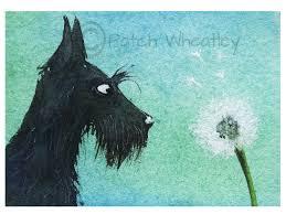 scottie dog art print scottish terrier u0027dandelion u0027 100 by
