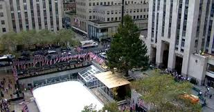 christmas comes early 78 foot spruce arrives to nyc u0027s rockefeller