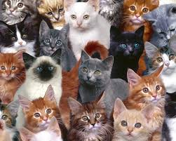 group photo different types of cute cats 1080 1024 imgur