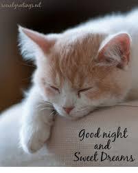 Sweet Dreams Meme - 25 best memes about good night sweet dreams good night