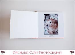 dog photo album willow s album connecticut dog photographer vt wedding