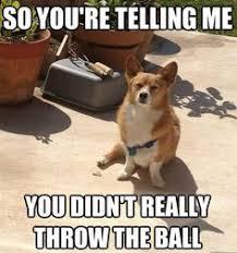 5 corgi memes that will brighten your day corgi meme corgi and meme
