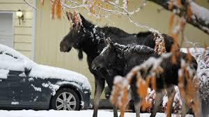 news spokane north idaho news u0026 weather khq com