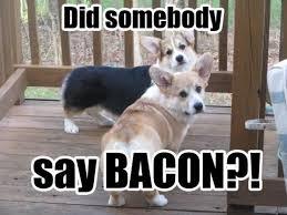 best corgi memes part 1 corgi dogs corgi meme pinterest