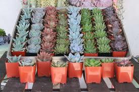 Succulent Pots For Sale 2