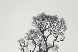 free stock photos of tree branches pexels
