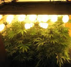 cfl grow light fixture choosing grow lights stoner pros