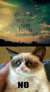 Grumpy Cat Meme No - habra alguien que tema perderme no grumpy cat gato enojado amargado