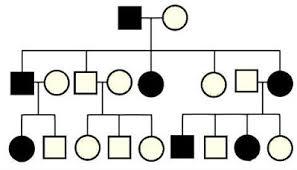 genetics practice problems pedigree tables pedigrees for predicting genetic traits