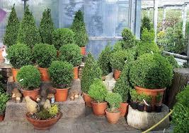 chestha pflanzen idee terrasse - Pflanzen Fã R Den Balkon