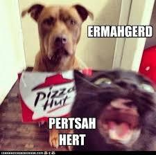 Ermahgerd Animal Memes - derp ermahgerd derp face derps hurr durr derp face derp