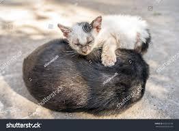 close baby white stray cat sleeping stock photo 352972778