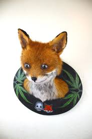 Taxidermy Fox Meme - stoned fox dead fox cup mascot adele morse