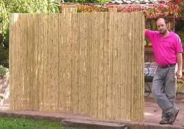 Tips Bamboo Fencing Best Bamboo For Privacy Fence Bamboo Tree