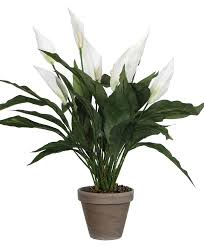 Peace Lily Buy Mica Artificial Peace Lily White Bakker Com