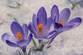 fiori viola ste artistiche quadri e poster con erba fiori foglie macro
