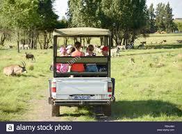 safari jeep safari jeep animal world game park emerald resort u0026 casino stock