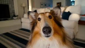 so entfernst du hundeurin geruch sogar aus dem sofa
