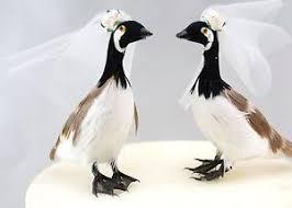 birds wedding cake toppers canada goose birds wedding