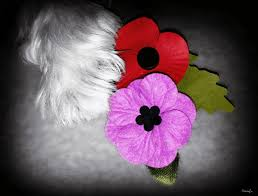 black u0026 white remembrancesunday lest we forget pawedblog