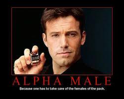 Alpha Meme - amanda on the edge the definition of an alpha male