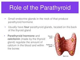 Anatomy And Physiology Of The Back Endocrine System Overview Hs Anatomy And Physiology