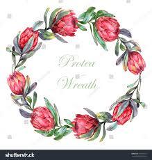 Reath Design Handdrawn Watercolor Illustration Wreath Red Protea Stock
