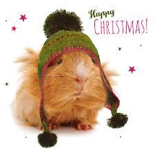 guinea pig christmas cards christmas lights card and decore