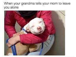Dog Mom Meme - 31 memes to send to your mom right now