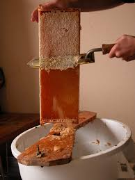 Harvesting Honey From A Top Bar Hive Honey Extraction Wikipedia