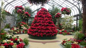 christmas tree green greenhouse house red flower crown hd