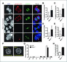 mammalian sterile 20 u2013like kinase 1 suppresses lymphoma development