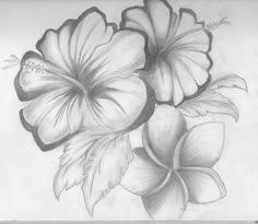 20 best what different type of drawing of flowers i like images on